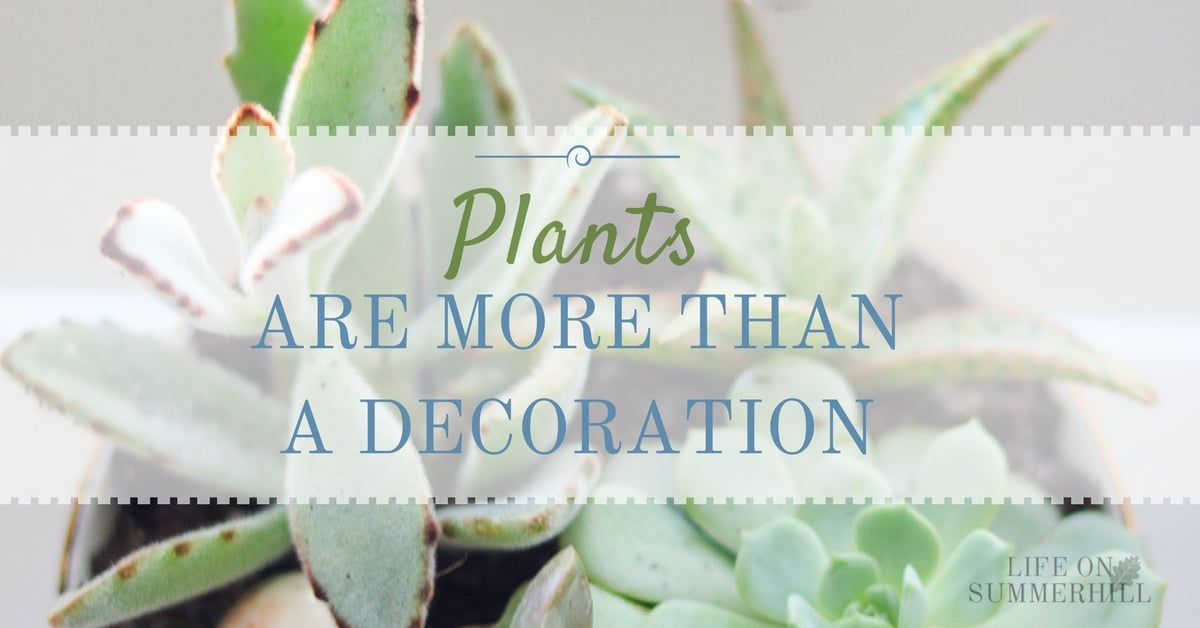 Plants are more than a decoration life on summerhill for Decoration 4 life