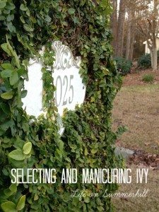 How to trim ivy on a brick wall or mailbox. Bad Fig