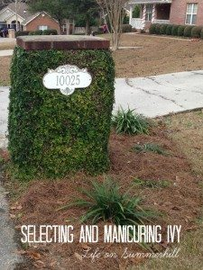 How to trim ivy on a brick wall or mailbox. LANDSCAPE IVY