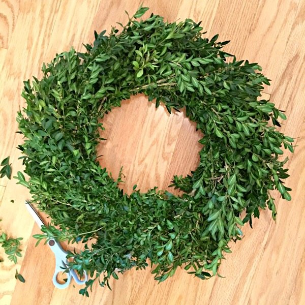 Trimming a boxwood wreath