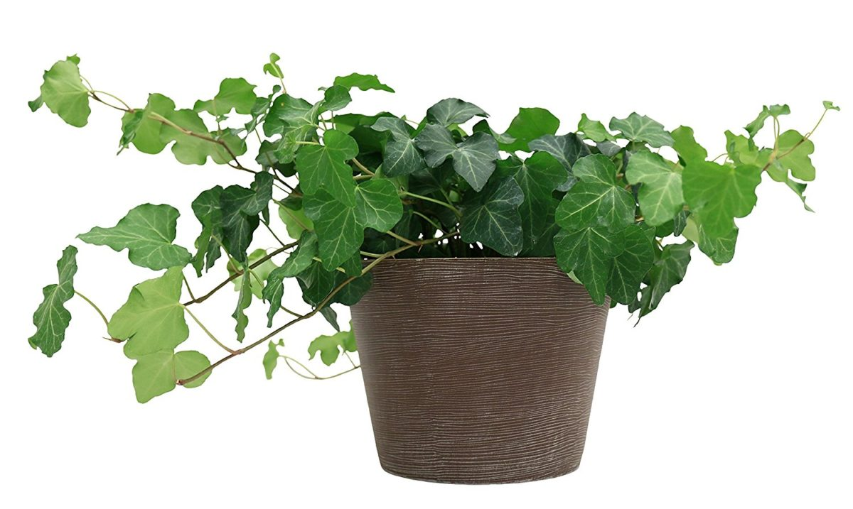 Best indoor plant is an English ivy to name one.