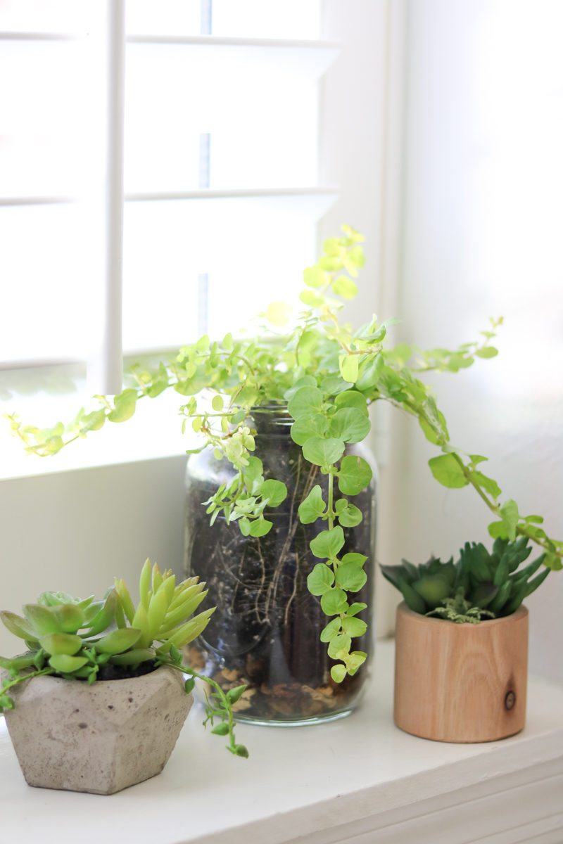 Plants are more than a decoration