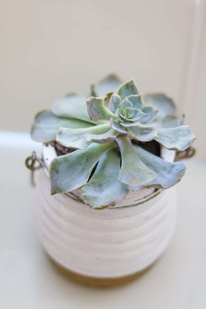 Best indoor plant is a succulent to name one.