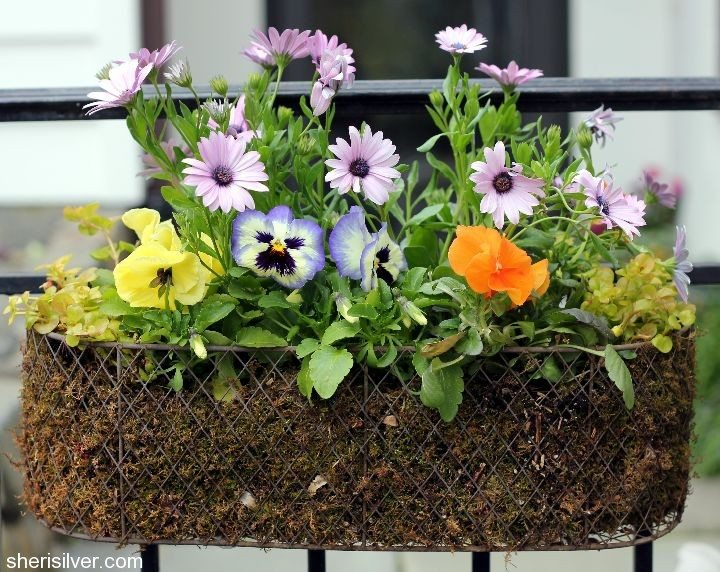 Creativity & Inspiration Tuesday Upcycled Decor Old Basket Planter Water Can