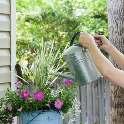SENSATIONAL CONTAINER FLOWER GARDENING LIKE A PRO 2