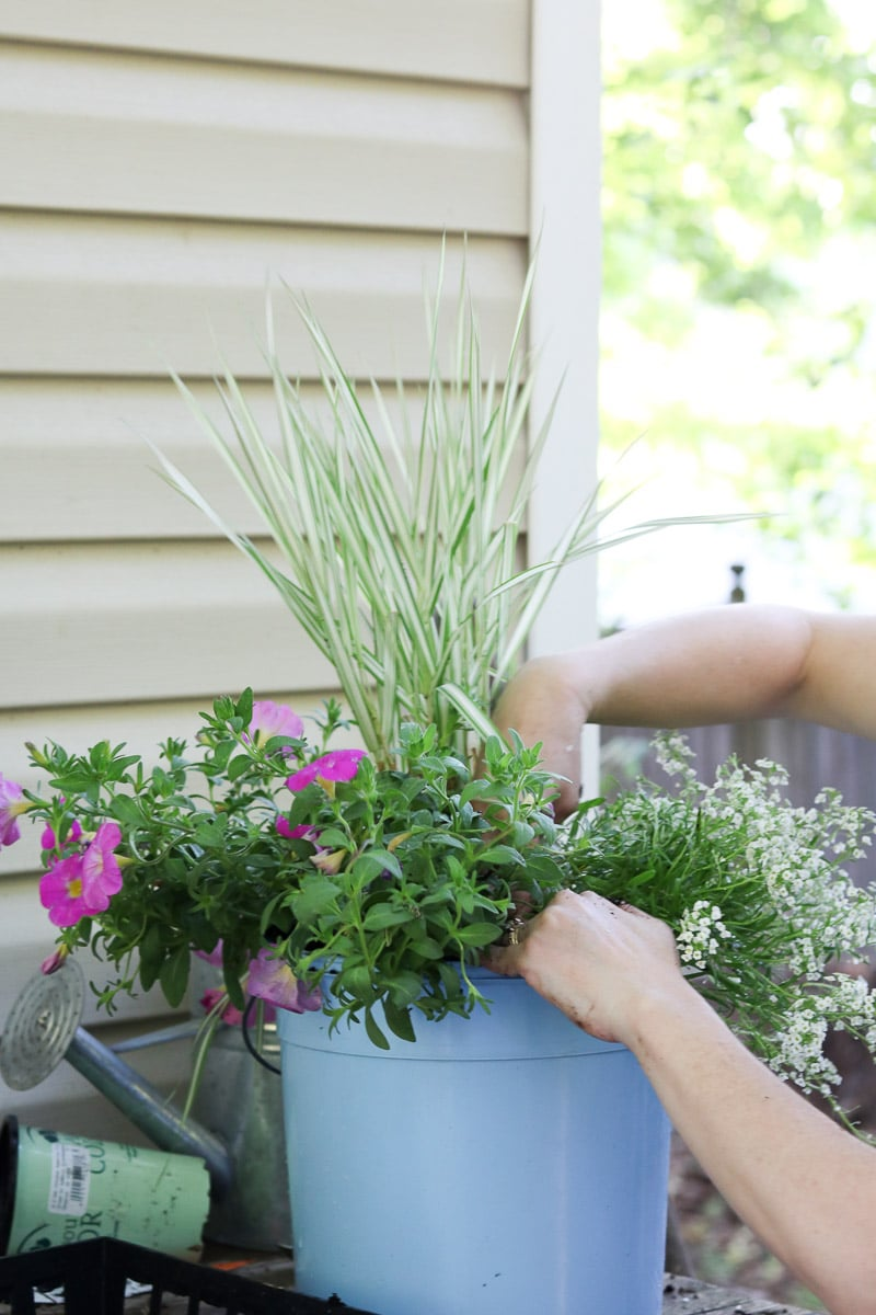 Container flower gardening add more soil and press