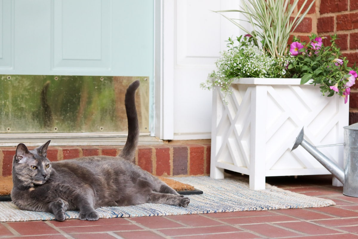 small front porch decorating ideas with flowers and my cat Stinkerbelle