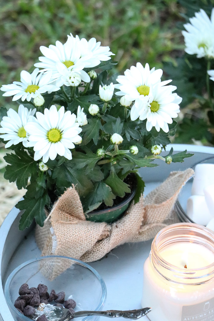 Outdoor fall decor using a small white mum