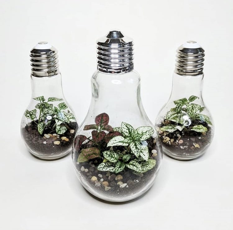 Light Bulb Crafts by Glass Half Full Terrariums with bulb vases that encompass a terrarium