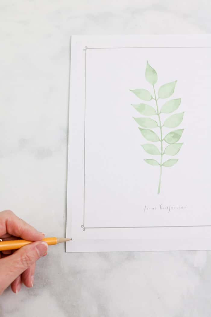 botanical free downloadable art prints DIY frame project mark corners to cut
