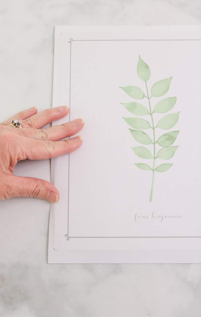 botanical free downloadable art prints DIY frame project print and score edges to cut print