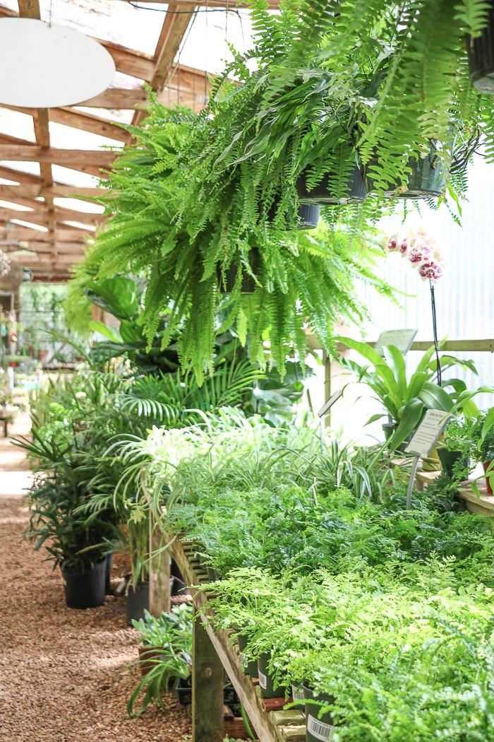 Visiting a greenhouse for plants for screened in porch decorating ideas.