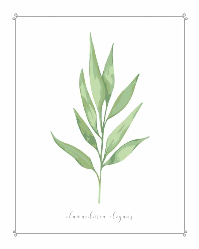 watercolor botanical free printable