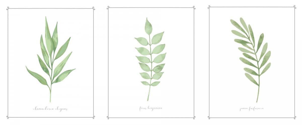botanical free downloadable art prints