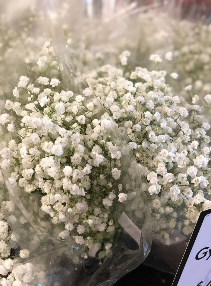 Best places to buy flowers showing babies breath at Fresh Market
