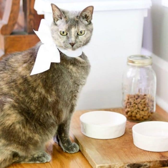 What is a bread board? Our cat, Tinkerbell, at her pet station where we used a bread board as base