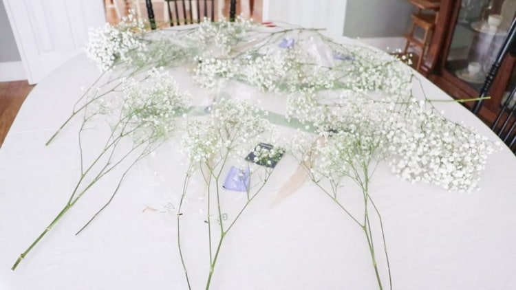 Lay your flowers, baby's breath, on a table separated.