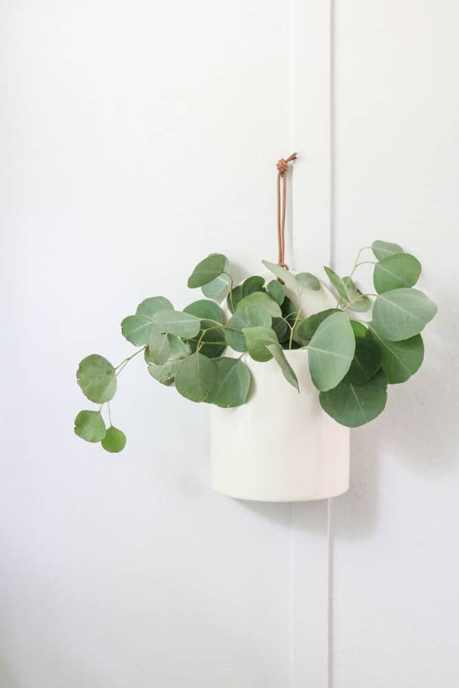 Hanging crock on the wall filled with fresh eucalyptus