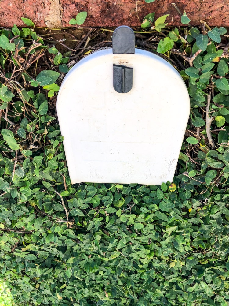 How to manicure ivy on a mailbox