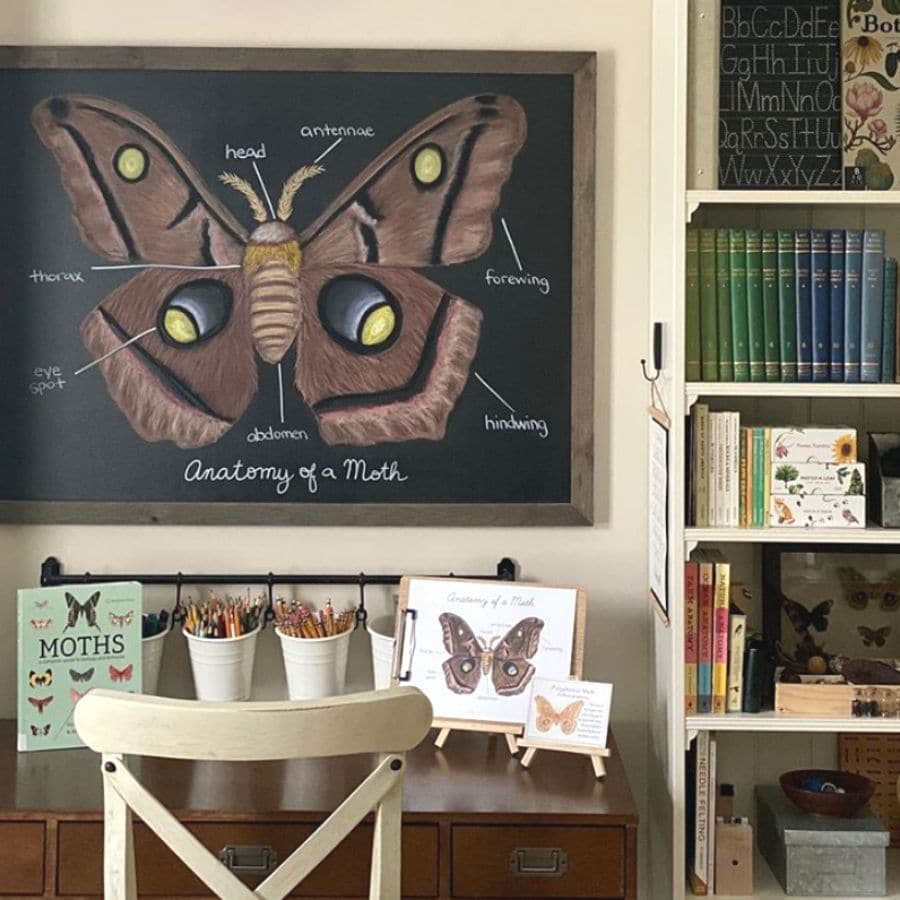A large chalkboard with a detailed image of a moth drawn on it hanging over a desk.