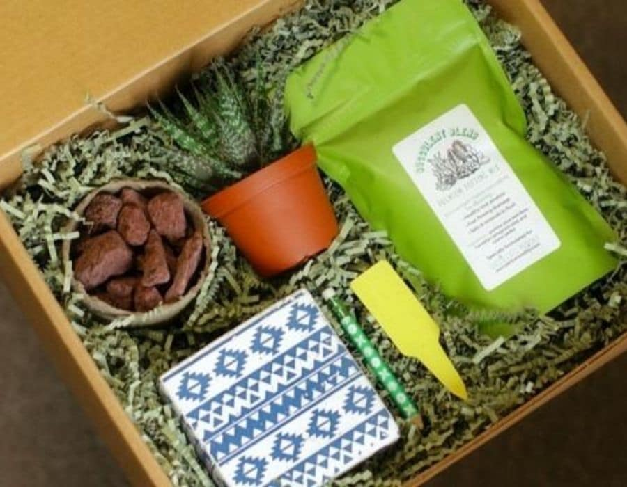 Succulents monthly subscription box plant, planter, and planting supplies like dirt and stones.