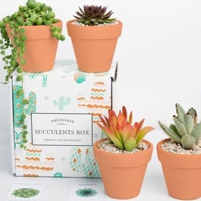 House plant subscription box with succulents