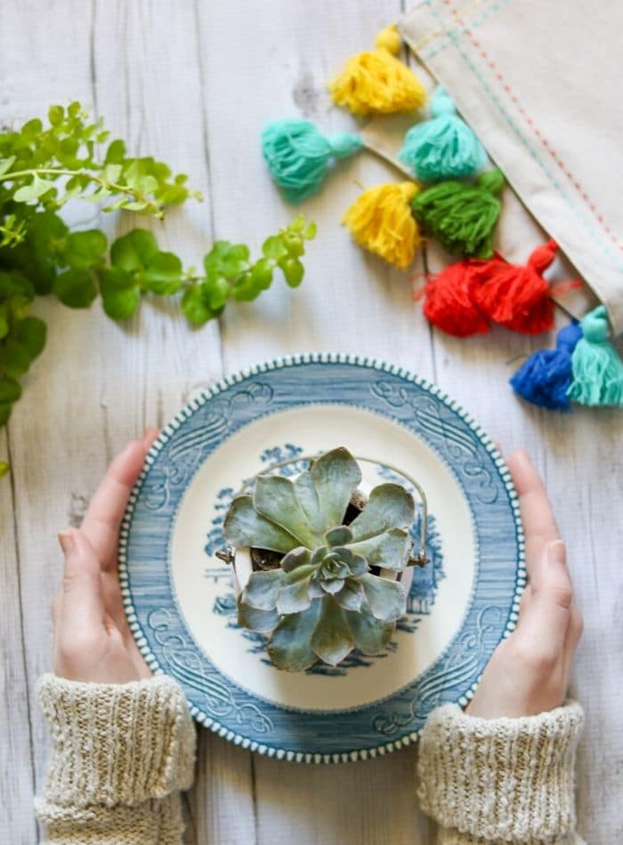 Succulent sitting on a blue and white plate