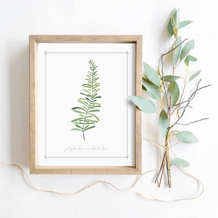 Cheap botanical printable to frame for your home decor