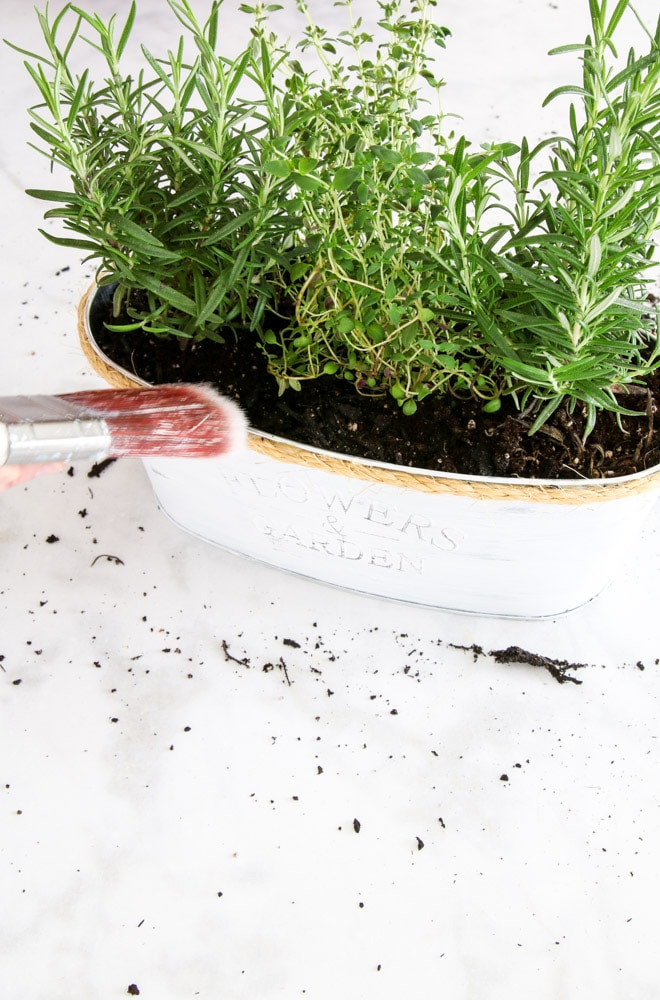 Brushing away any soil from jute with a paint brush