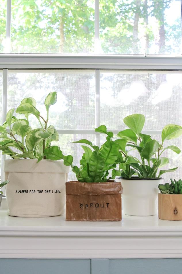 Dekorieren mit Pflanzen in einer Fensterdichtung