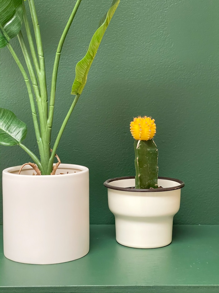 Plants for do it yourself mudroom storage idea